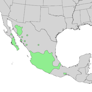 Bursera fagaroides - Image: Bursera fagaroides range map 1