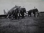 C-47 Elephant recovery (15894091269).jpg