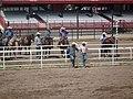 CFD Tie-down roping cowboys -5.jpg