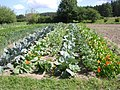 Cabbages, beetroot, onions - panoramio.jpg