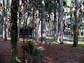 Cabins at Hontoon Island.jpg