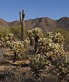 Cacti (4270730290).jpg