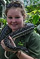 Cairns Wildlife Dome Python and Handler-01 (8229650464).jpg