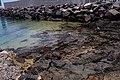 Cala en Puerto Naos 01.jpg