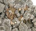 Calaverite-Quartz-174250.jpg