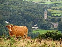 Callow Hill Beef - geograph.org.uk - 953784.jpg