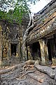 Cambodia-2537 - Hug me, but not to hard. (3608232392).jpg
