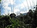Cameron Highlands - Malaysia - panoramio.jpg