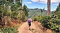 Camino de Costa Roca Coffee plantation hike.jpg