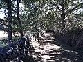 Camino de Santiago, 1km al sureste de Vilar de Barrio 1.jpg