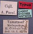Camponotus dufouri casent0101669 label 1.jpg