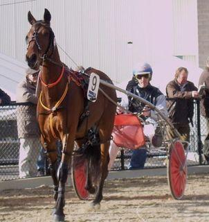 Captain Joy Australian Standardbred racehorse