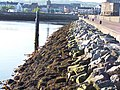 Carrickfergus Harbour Wall - geograph.org.uk - 324062.jpg