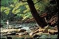 Catoctin Mountain Park, Maryland (87c18db8-7718-4a53-a357-244c2375f585).jpg