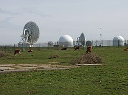 Cattle by GCHQ radio station - geograph.org.uk - 412255.jpg