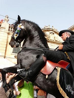 Menorquín horse - Menorquín horse and rider