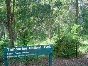 Tamborine National Park - Cedar Creek Falls, 2011