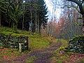 Ceunant Llennyrch Woodland Trail - geograph.org.uk - 350593.jpg