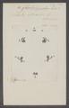 Chalcolepidius - Print - Iconographia Zoologica - Special Collections University of Amsterdam - UBAINV0274 023 18 0002.tif