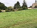 Champ près Cimetière St Cyr Menthon 1.jpg