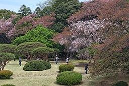 Cherry Blossoms in Shinjuku Gyoen(Shinjuku Imperial Garden) - 新宿御苑の桜 - panoramio (3)