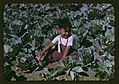 Child of a migratory farm laborer in the field during the harvest of the community center's cabbage crop, FSA labor camp, Tex. LCCN2017877660.jpg