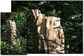 Chronoxyle Lille Fr Jardin Vauban2006.jpg