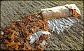 Cigarette butt on wet sidewalk after heavy rain Mégot 03.jpg