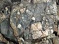 Clast-rich mixtite (Coleman Member, Gowganda Formation, Paleoproterozoic, ~2.3 Ga; Percival Lake roadcut, Ontario, Canada) 20 (47674218542).jpg