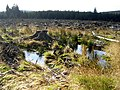 Clear Fell on Blaemount Rig - geograph.org.uk - 608660.jpg