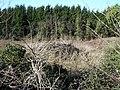 Cleared plot on Lower Hartlip Road - geograph.org.uk - 122845.jpg