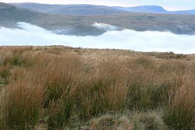 Cloud in Glyn Tarell - geograph.org.uk - 1108697.jpg