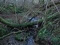 Cluttered woodland stream near Longframlington - geograph.org.uk - 1123334.jpg