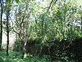 Coed Cilgeraint Woods - geograph.org.uk - 829059.jpg