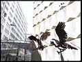 Condores 3.jpg