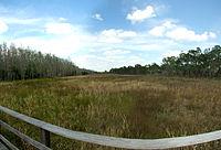 Corkscrew swap sanctuary, Florida.jpg