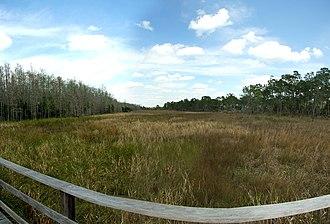Corkscrew Swamp Sanctuary - Image: Corkscrew swap sanctuary, Florida