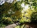 Cotehele in Autumn - geograph.org.uk - 613282.jpg