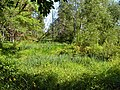 Cowles Bog - panoramio.jpg
