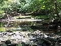 Crabtree Creek Umstead SP NC 5697 (4780007577).jpg