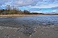 Cranberry Marsh.jpg