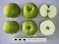 Cross section of Beauty of Moray, National Fruit Collection (acc. 1942-035).jpg