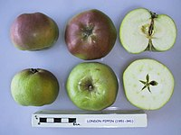 Cross section of London Pippin, National Fruit Collection (acc. 1951-341).jpg