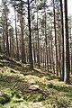 Cumrie Plantation - geograph.org.uk - 768620.jpg