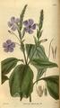 Curtis's Botanical Magazine, Plate 3068 (Volume 58, 1831).png