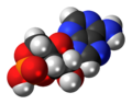 Cyclic-adenosine-monophosphate-3D-spacefill.png