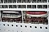 DK-84 - København - Copenhagen - Denmark - Eurodam - Holland America Line (4890882336).jpg