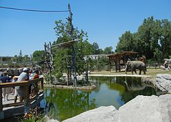 Denver Zoo Elephant Passage gibbon island.jpg