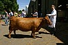 Dexter cow, Three Counties Show.jpg