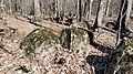 Diabase boulders 20210302.jpg